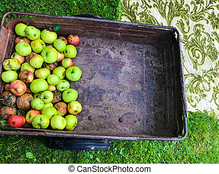 apple story. apples are in a garden cart. fruits are harvested for transportation around the summer cottage. fruit trees, apple orchard. bright and juicy apples, delicious and beautiful