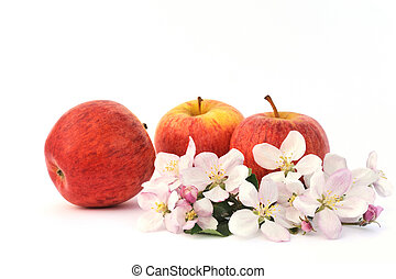 apple-tree, äpplen, blomstringar