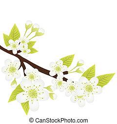 apple-tree, ענף
