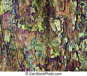 Apple tree bark