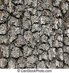 Apple tree bark texture as background