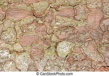 Apple Tree Bark Texture Macro