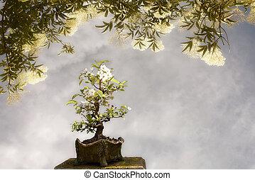 Blossoming apple tree bonsai under a big tree