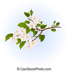Apple tree branch with flowers vector.eps