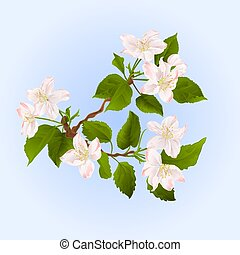 Apple tree branch with flowers vector