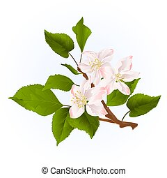 Apple tree branch with flowers vintage vector.eps