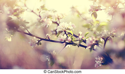 Apple-tree flowers in the spring