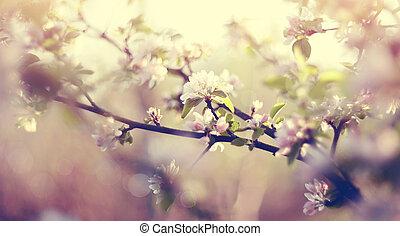Apple-tree flowers in the spring