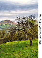 apple tree garden on hillside meadow in mountain - summer...