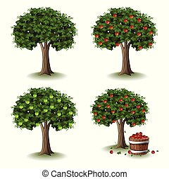 Apple tree illustration collections set