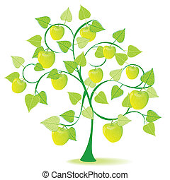 apple tree in green summer