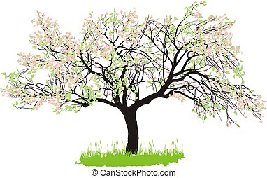 vector drawing of an old apple tree in spring