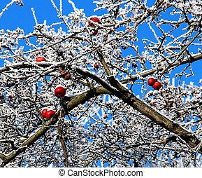 Apple tree in the snow.