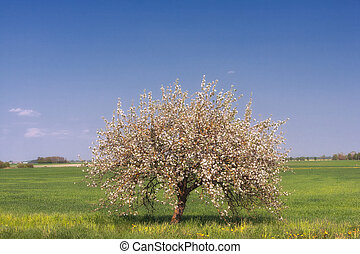 Apple tree in the spring on the sky background