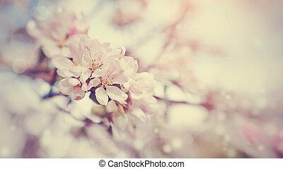 Apple-tree pink flowers.
