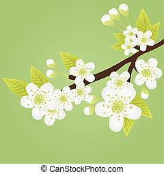 apple-tree, rama
