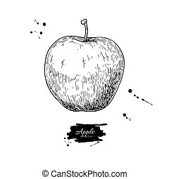 Apple vector drawing. Hand drawn isolated fruit. Summer food