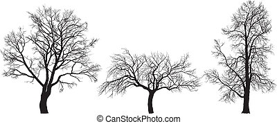 apple, walnut and chestnut tree - Vector illustration of...