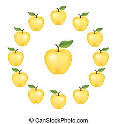 Apples in a wheel, Golden Delicious, fresh, natural, ripe, orchard garden fruit in a circle, isolated on a white background. EPS8 compatible.