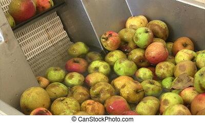 Apple wine press - Apples in water moving in winepress