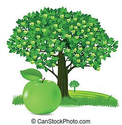 Apple with apple tree