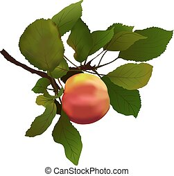 apple with leaves illustration
