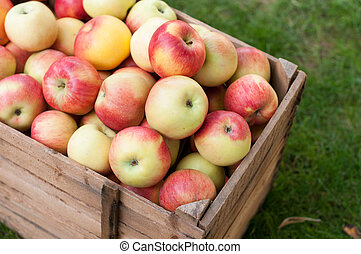 Applel harvest