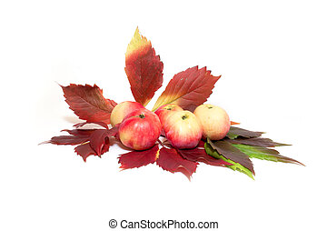 Apples and leaves of vine