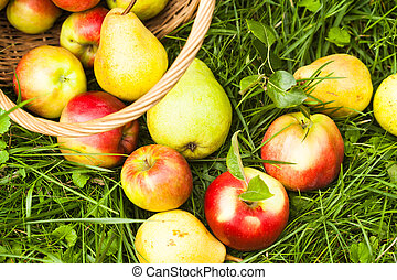Apples and pears on the grass