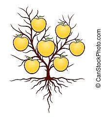 apples., arbre