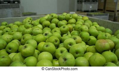 Apples box green farm