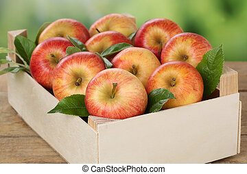 Apples in a box in autumn
