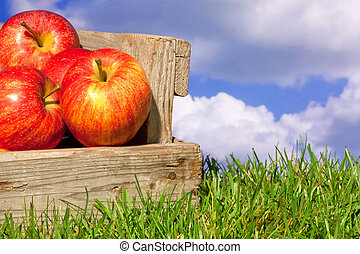 Apples in a crate on grass with blue cloudy sky