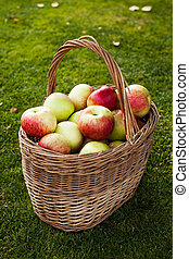 apples in basket in center on the grass
