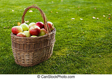 apples in basket in left corner on the grass