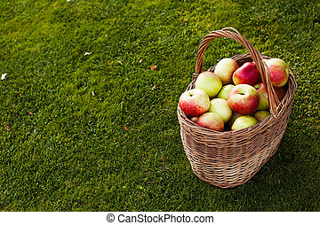 apples in basket in right corner on the grass