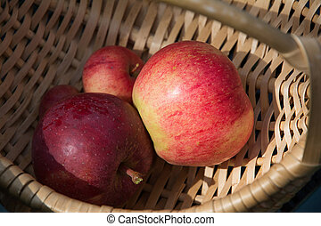 Apples in the basket