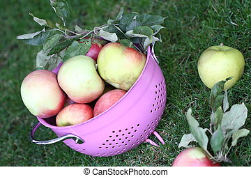 Apples in the pink strainer