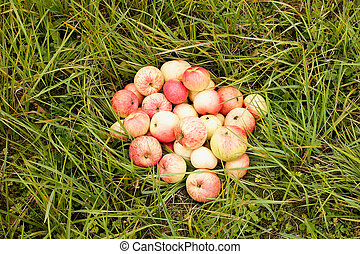 Apples on a grass