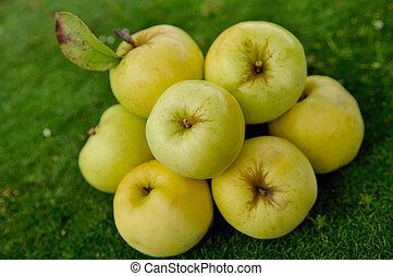 apples on green grass