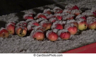 Apples on table and snowfall
