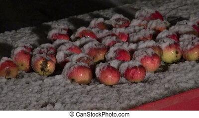 Apples on table and snowfall