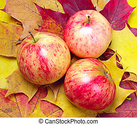 Apples on the background of maple leaves