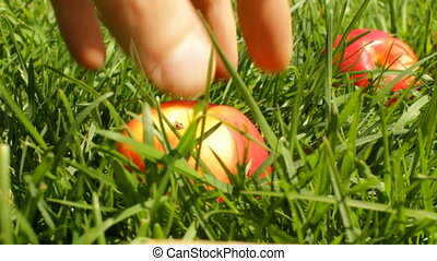 Apples on the grass