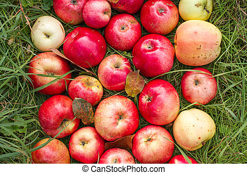 Apples on the green grass
