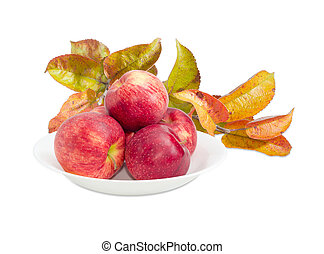 Apples on white dish on background of apple tree branch