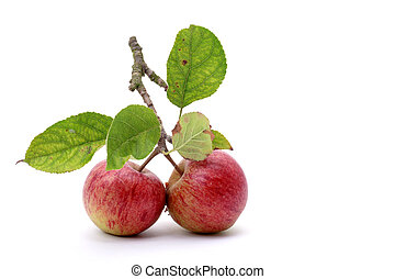 two apples with leaves