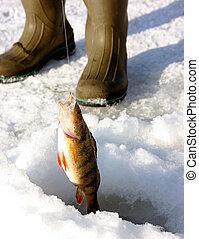 appollaiarsi, pesca, ghiaccio