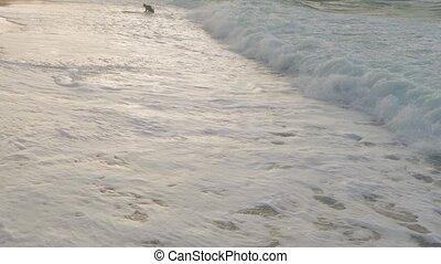 apporté, rivage, surfeur, vague