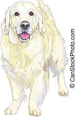 apportierhund, labrador, rasse, gewehr, vektor, gelber , skizze, hund